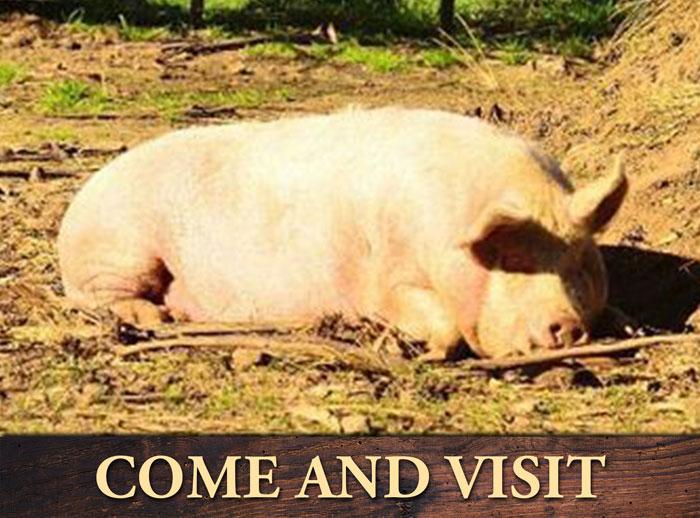 Pig-Gallery3